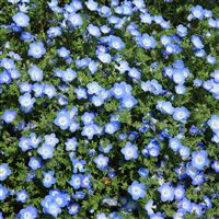 Flower Spring Blue Nature iPad Air wallpaper