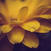 Flower Petals Drops Macro iPad Air wallpaper