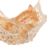 Cat Hammock Kitten Red Fluffy iPad wallpaper