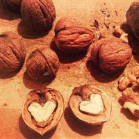 Walnuts Heart Shell iPad Air wallpaper