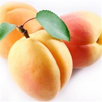 Apricot Fruit Branch iPad wallpaper