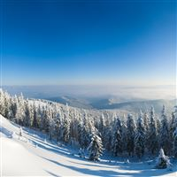 Mountains Snow Trees Slope iPad wallpaper