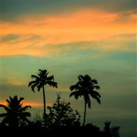 Palms Grove Sunset Sky iPad wallpaper
