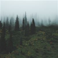 Trees Grass Fog iPad Air wallpaper