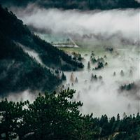 Trees Fog Mountains Summit iPad wallpaper