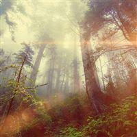 Forest Wood Fog Flare Red Nature Green iPad wallpaper