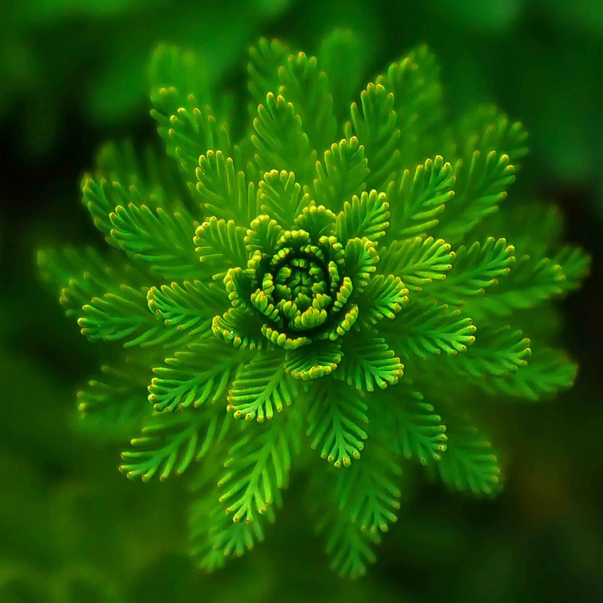 Algae plant iPad Air wallpaper