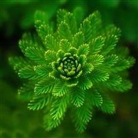 Algae plant iPad Air wallpaper