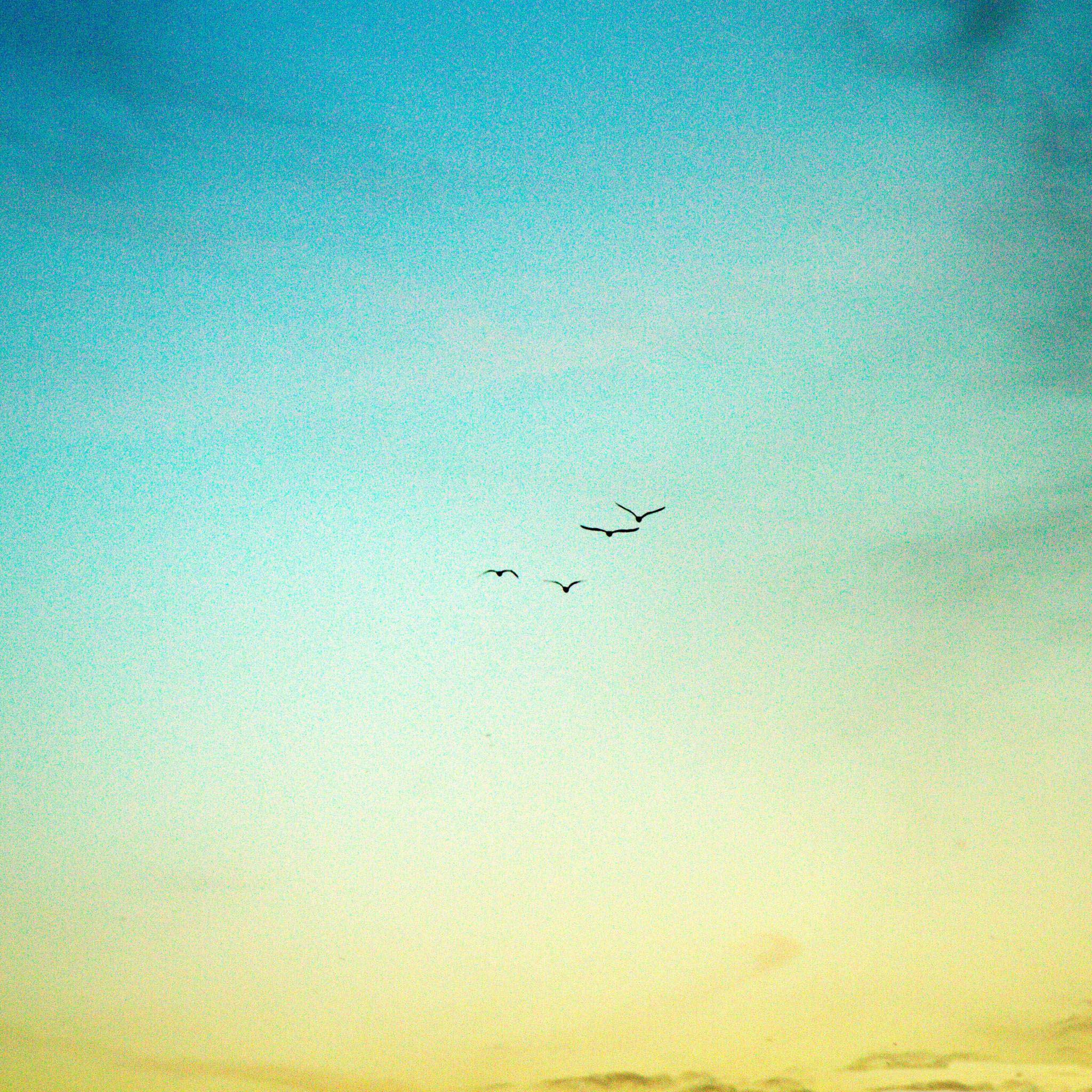 Big wild goose in the sky iPad Air wallpaper