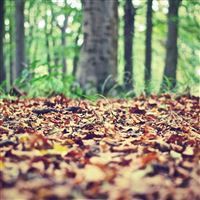 Autumn leaves iPad wallpaper