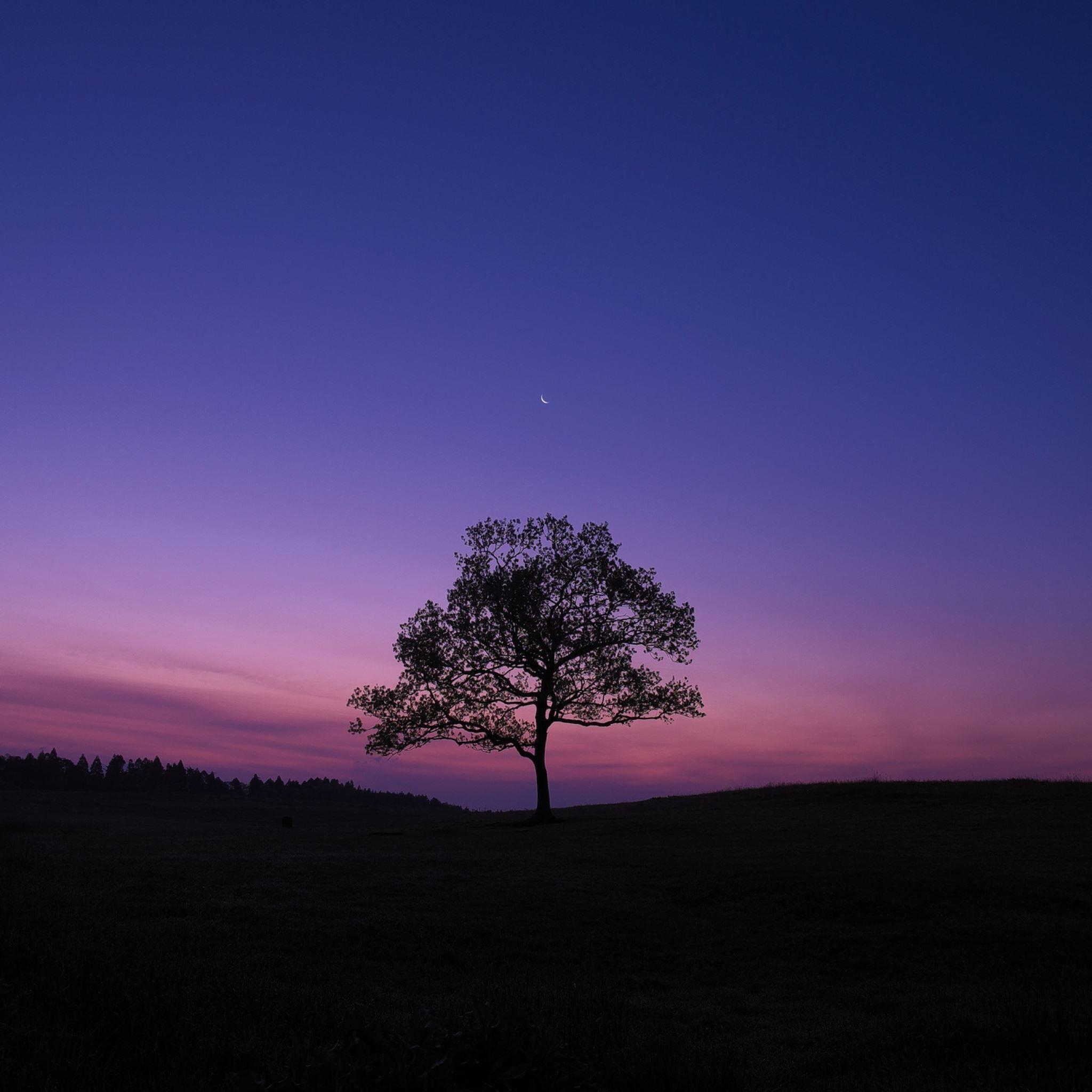 Tree night moon sky lonely iPad Air wallpaper
