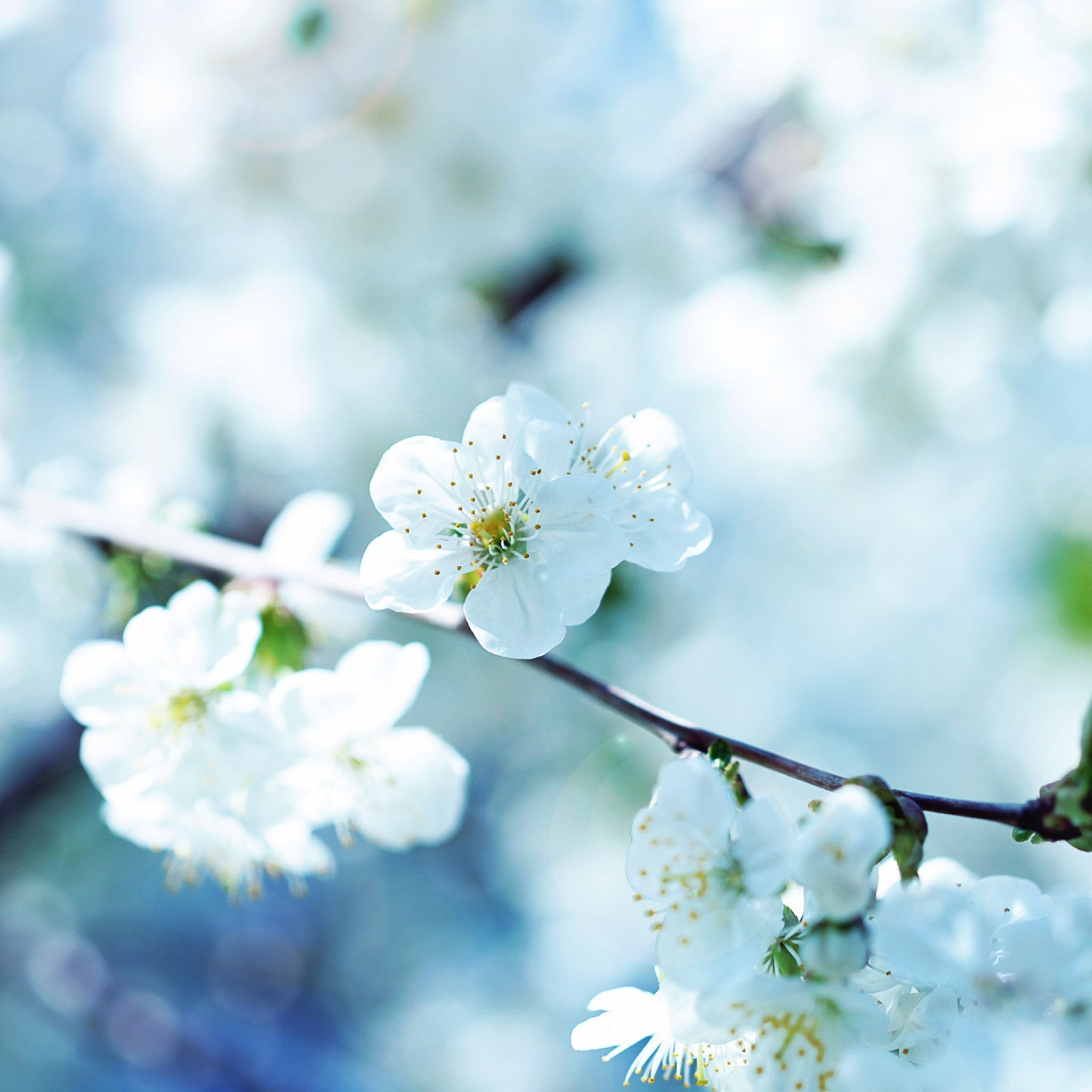 Flowers flowering branch plant spring iPad Air wallpaper