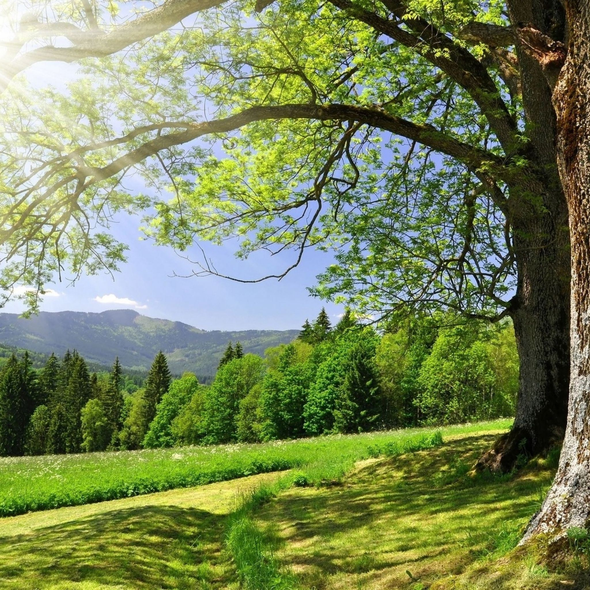 Trees spring sun iPad Air wallpaper