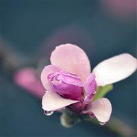 Flower patches petals iPad wallpaper