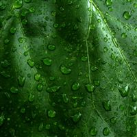 Drops dew surface grass leaves iPad wallpaper