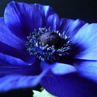 Flower background blue black petals iPad wallpaper
