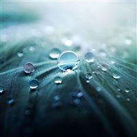 Pure Dew iPad Air wallpaper