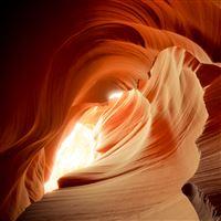 Antelope Rose iPad wallpaper