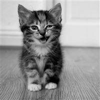 Cute Little Cat iPad wallpaper