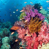 Tropical Fish and Coral iPad wallpaper
