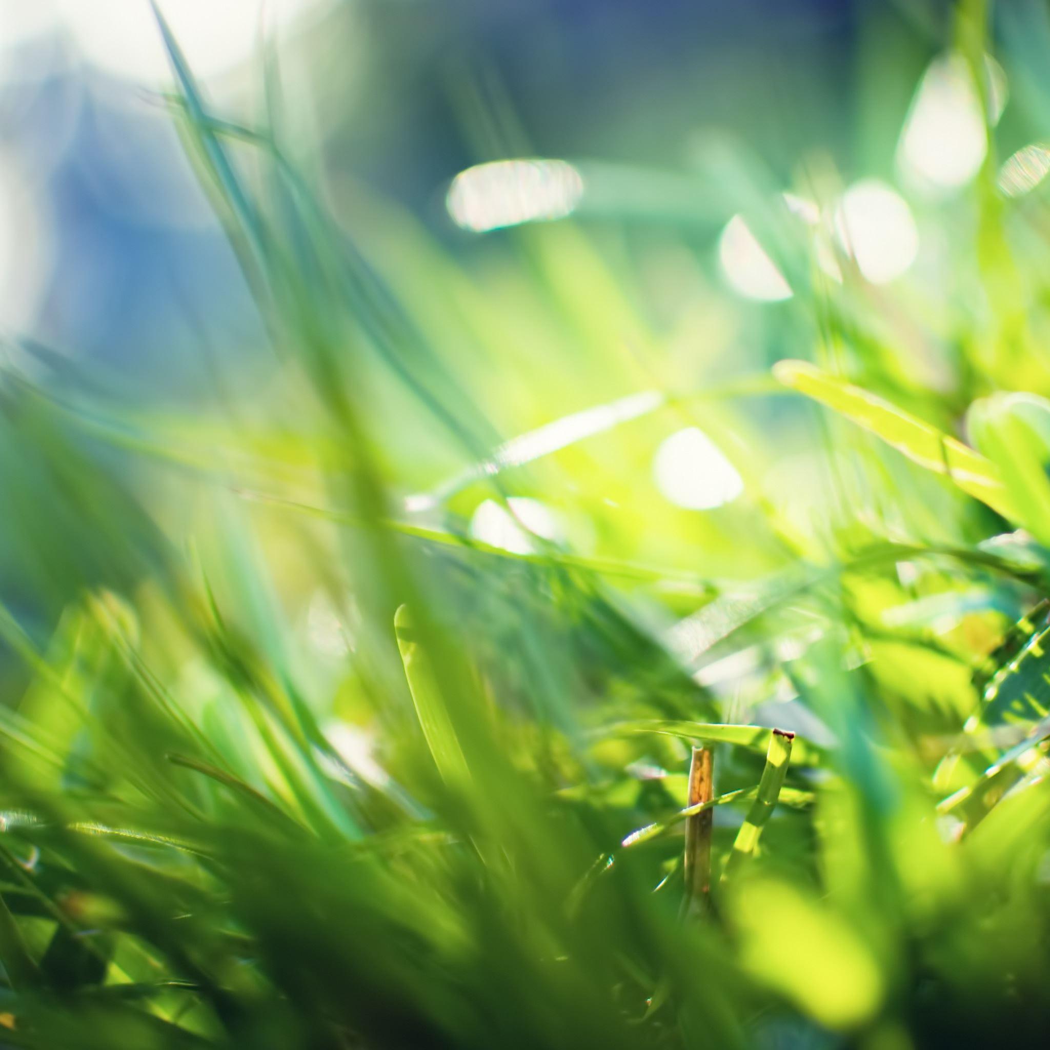 Grass Bokeh 2 iPad Air wallpaper
