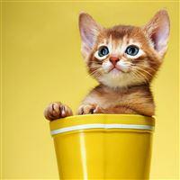 Cute and Sweet Kitty iPad Air wallpaper