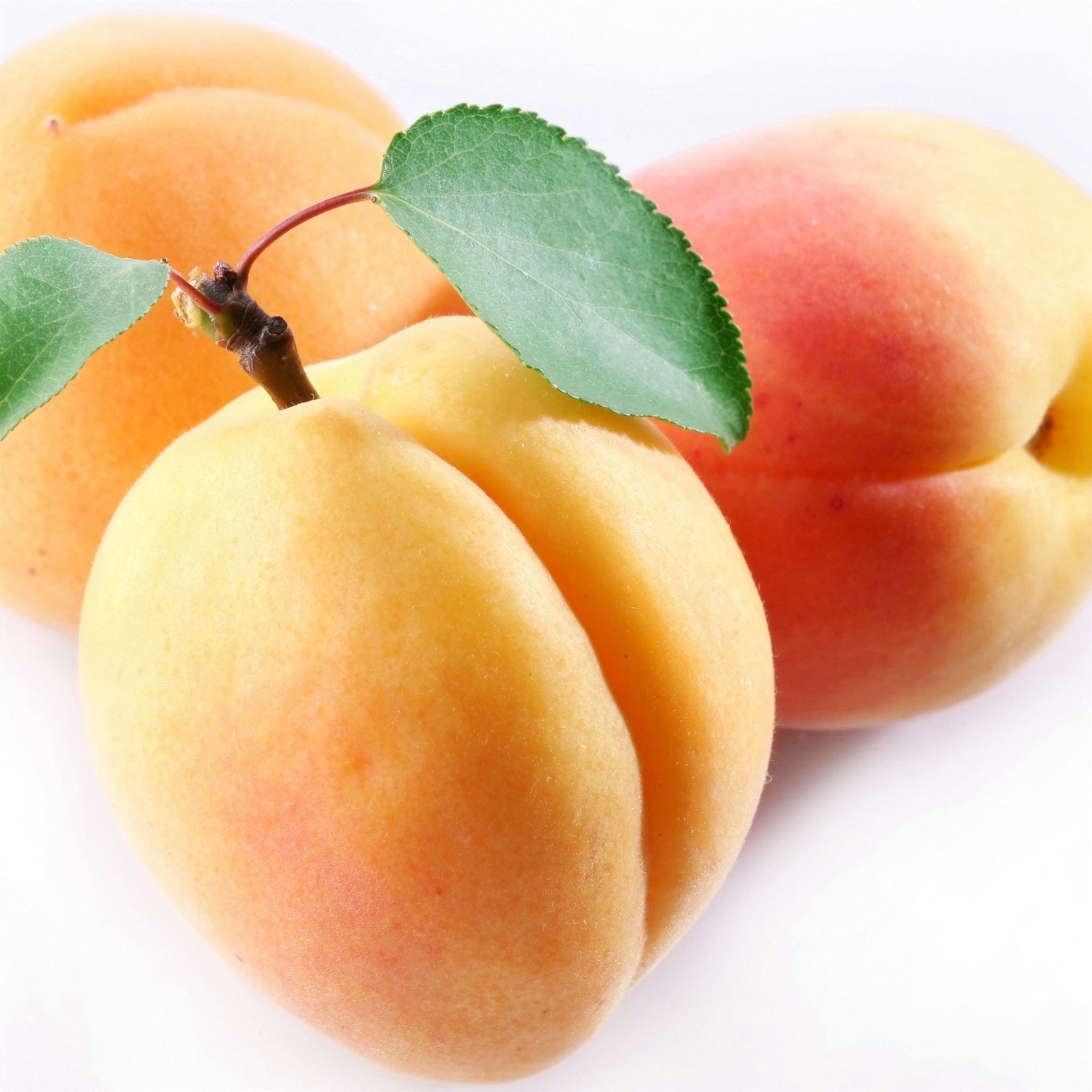 Apricot Fruit Branch iPad Pro wallpaper