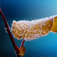 Leaf Macro Frost Branch iPad wallpaper