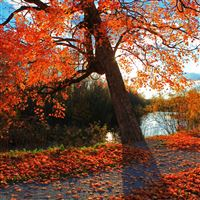 Autumn Park River Shop Landscape iPad wallpaper