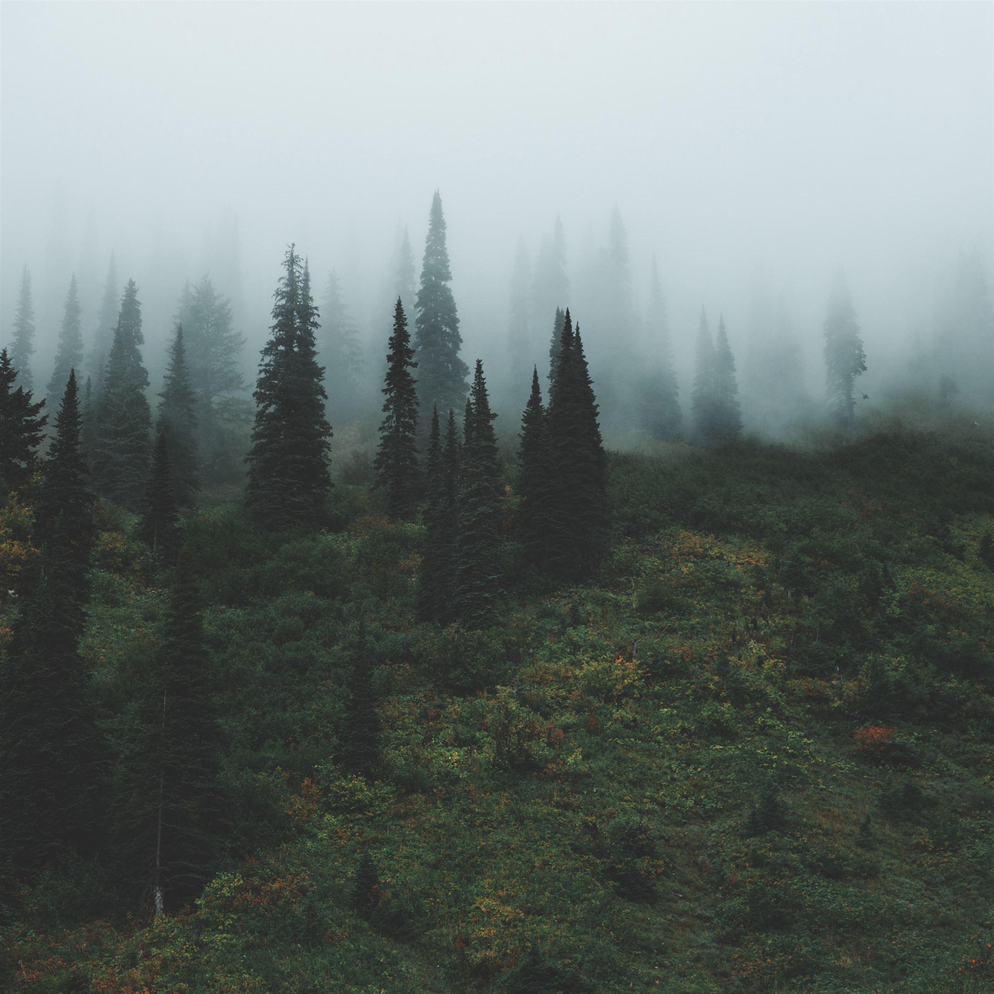 Trees Grass Fog iPad Pro wallpaper