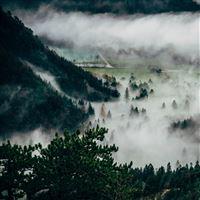 Trees Fog Mountains Summit iPad Pro wallpaper