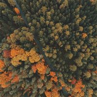 Forest Trees Top View iPad Pro wallpaper