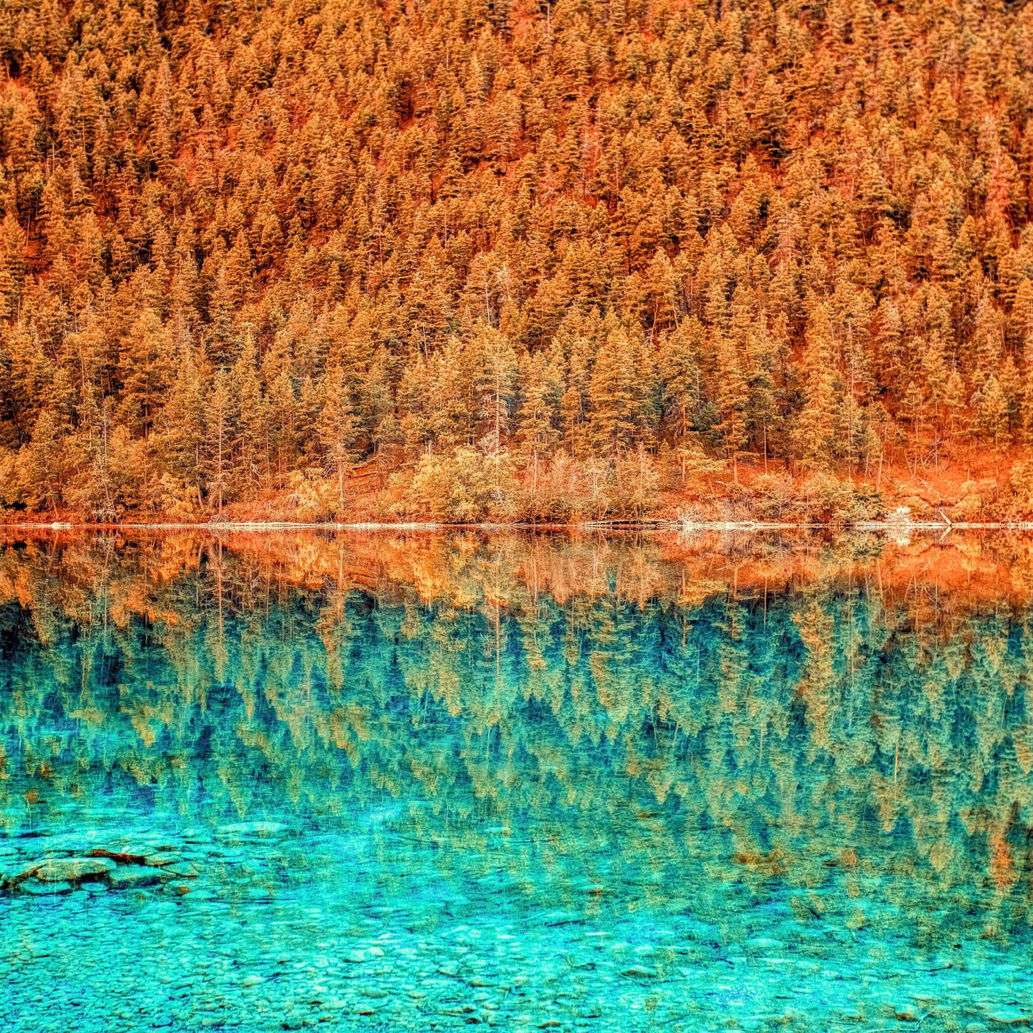 Lake Trees Reflection iPad Pro wallpaper