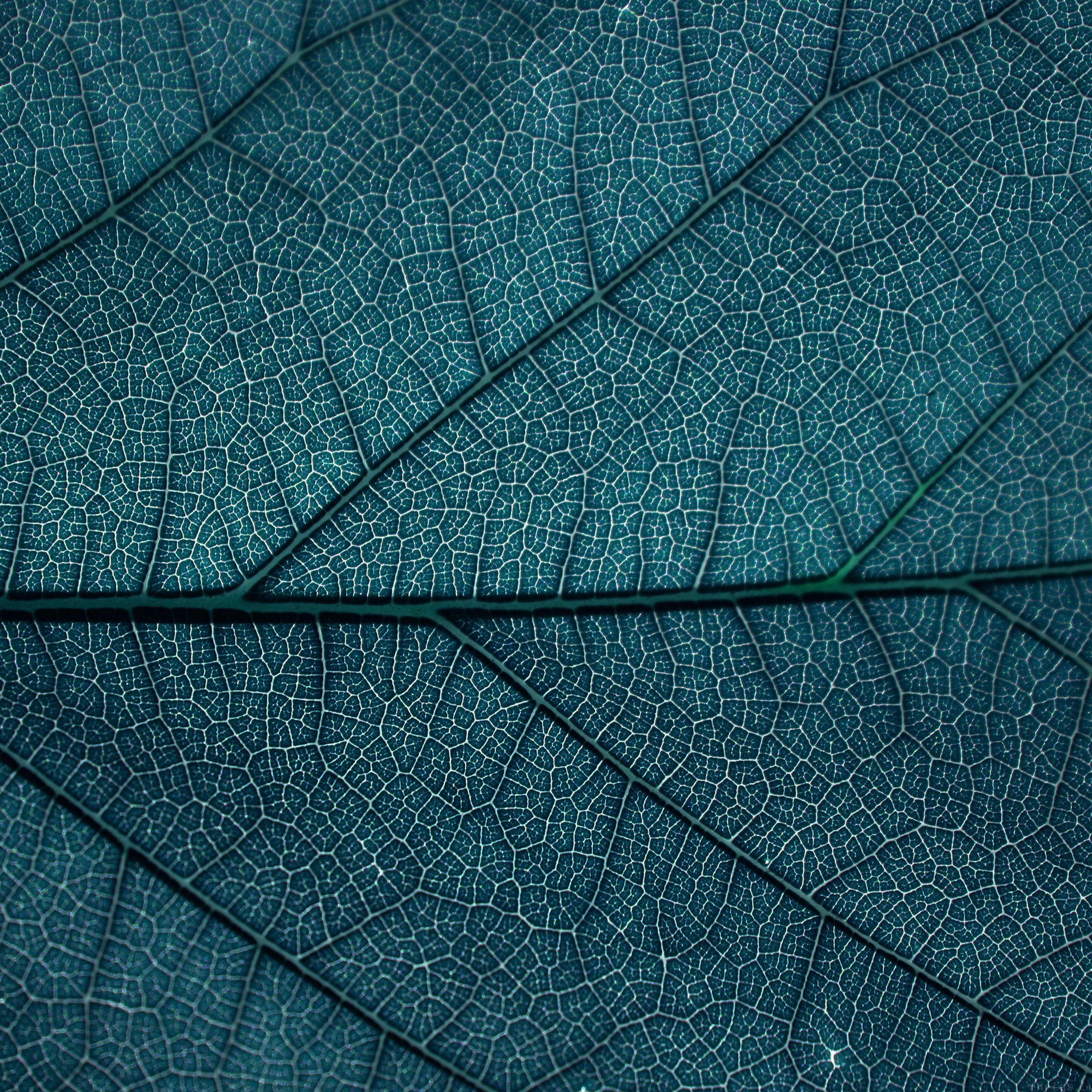 Leaf Blue Dark Nature Texture Pattern iPad Pro wallpaper
