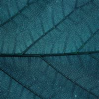 Leaf Blue Dark Nature Texture Pattern iPad wallpaper