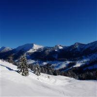 Winter wood coniferous snow cover carpet mountains iPad Pro wallpaper