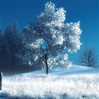 Winter landscape iPad wallpaper