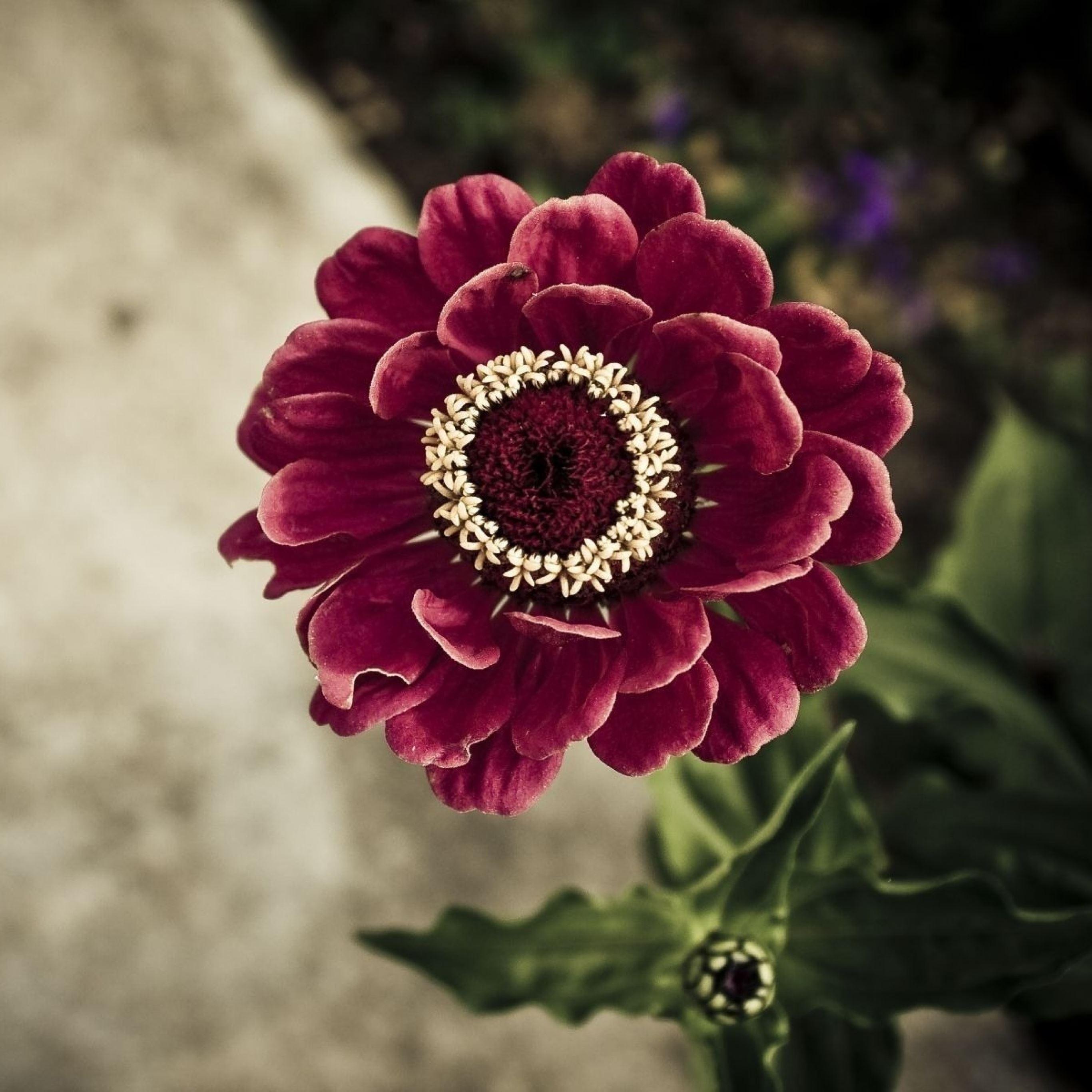 Flower petals iPad Pro wallpaper