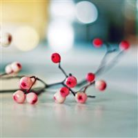 Branch berries table iPad wallpaper