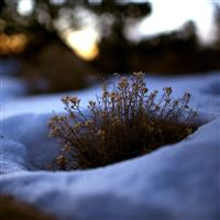 Grass snow melt spring iPad wallpaper