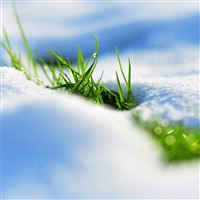 Spring snow grass reflections iPad wallpaper