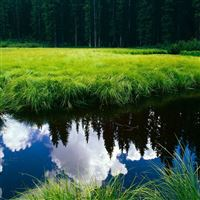 Grass reflection pond iPad wallpaper
