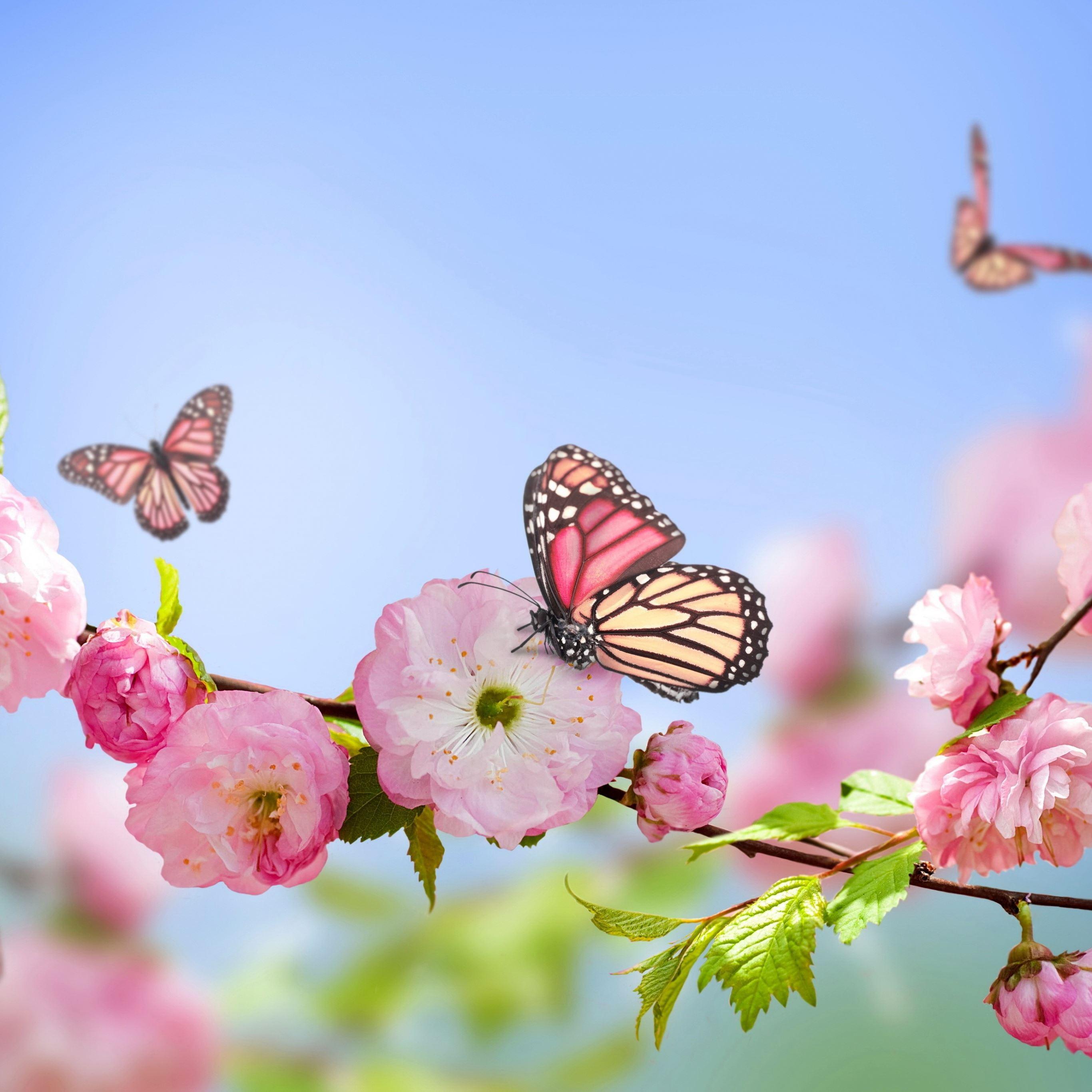 Flowers butterflies spring bloom branch iPad Pro wallpaper