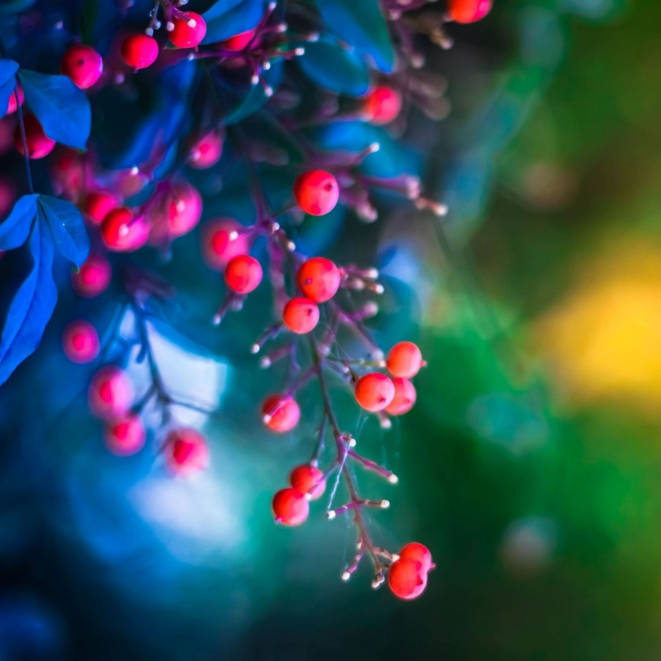 Twig berries leaves background iPad Pro wallpaper