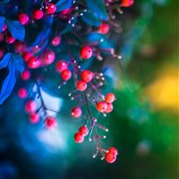 Twig berries leaves background iPad wallpaper