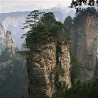 Rocks mountains trees tops vegetation fog coniferous iPad wallpaper