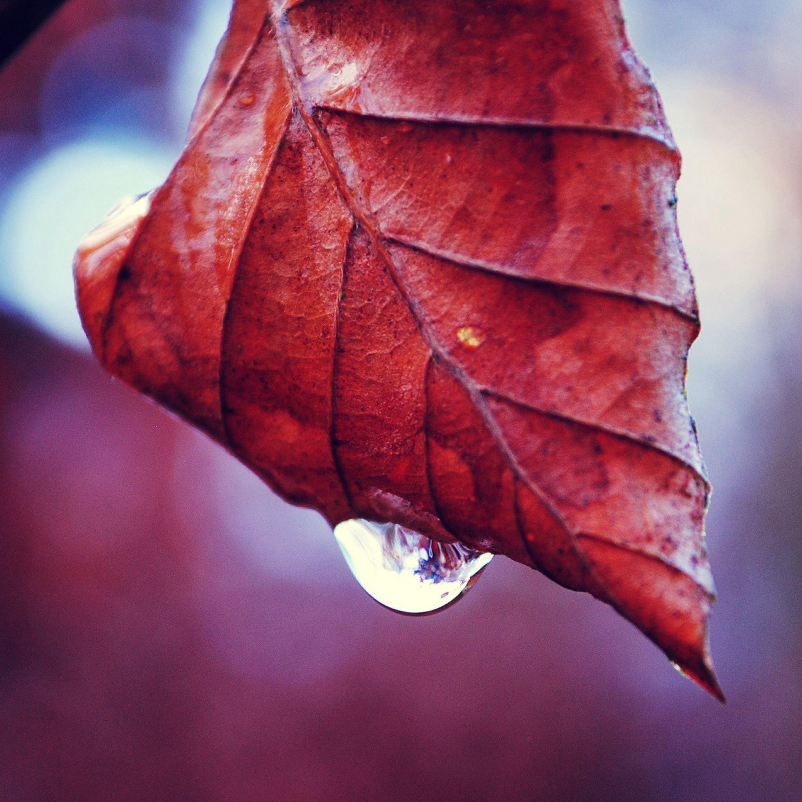 Leaf fall drop twig dry iPad Pro wallpaper