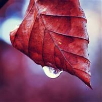 Leaf fall drop twig dry iPad wallpaper