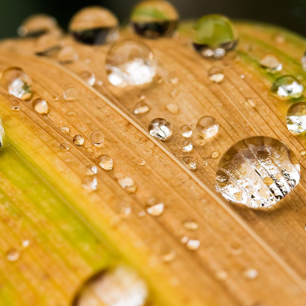 Water drops on a leaf iPad wallpaper