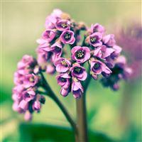 Spring Flowers iPad wallpaper